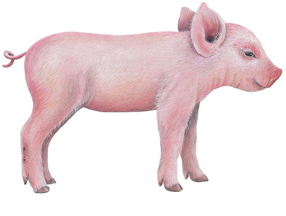 Pig head side view clipart vector library download Pig Side View Wall Decal | Products | Animal wall decals ... vector library download