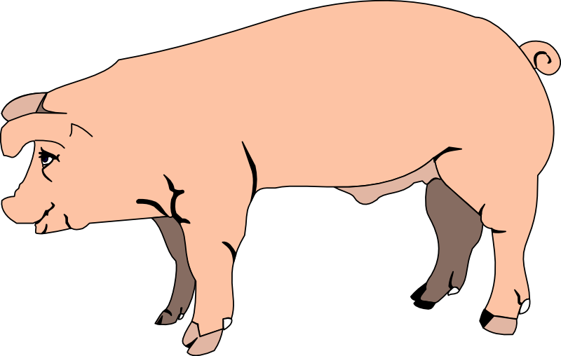 Pig head side view clipart clip stock HD Chef Pig Head - Pig Side View Clipart Transparent PNG ... clip stock
