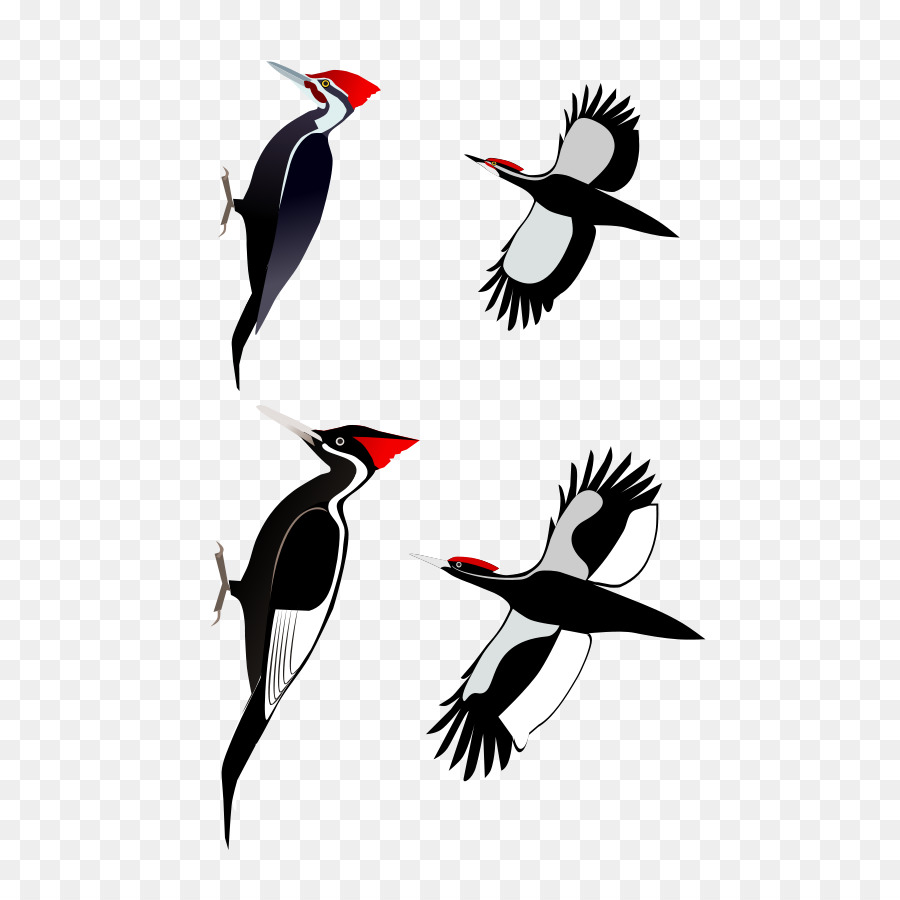 Pileated woodpecker clipart svg freeuse download Bird Cartoon clipart - Bird, Wing, Graphics, transparent ... svg freeuse download
