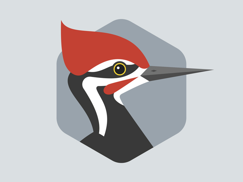 Pileated woodpecker clipart jpg free download Pileated Woodpecker by Brett Stiles on Dribbble jpg free download