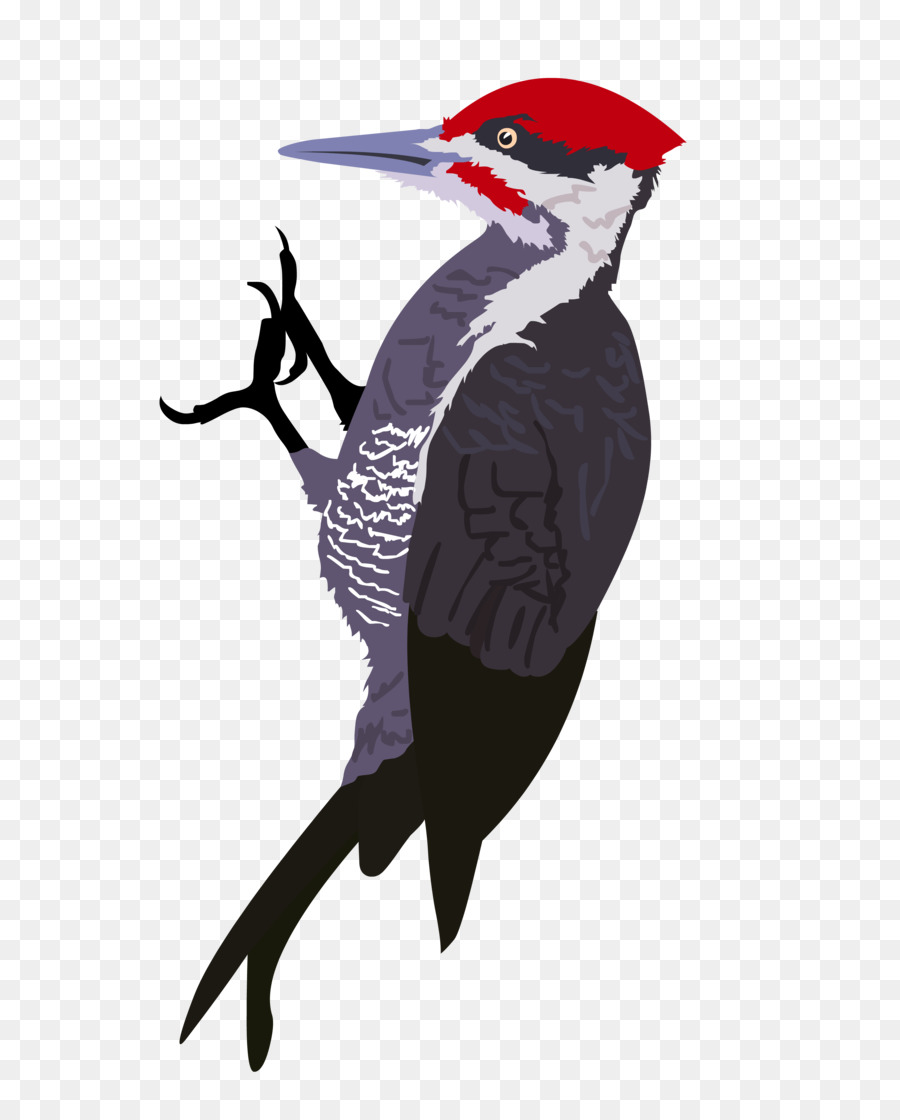 Pileated woodpecker clipart clip art freeuse download Bird Line Drawing png download - 3300*4083 - Free ... clip art freeuse download