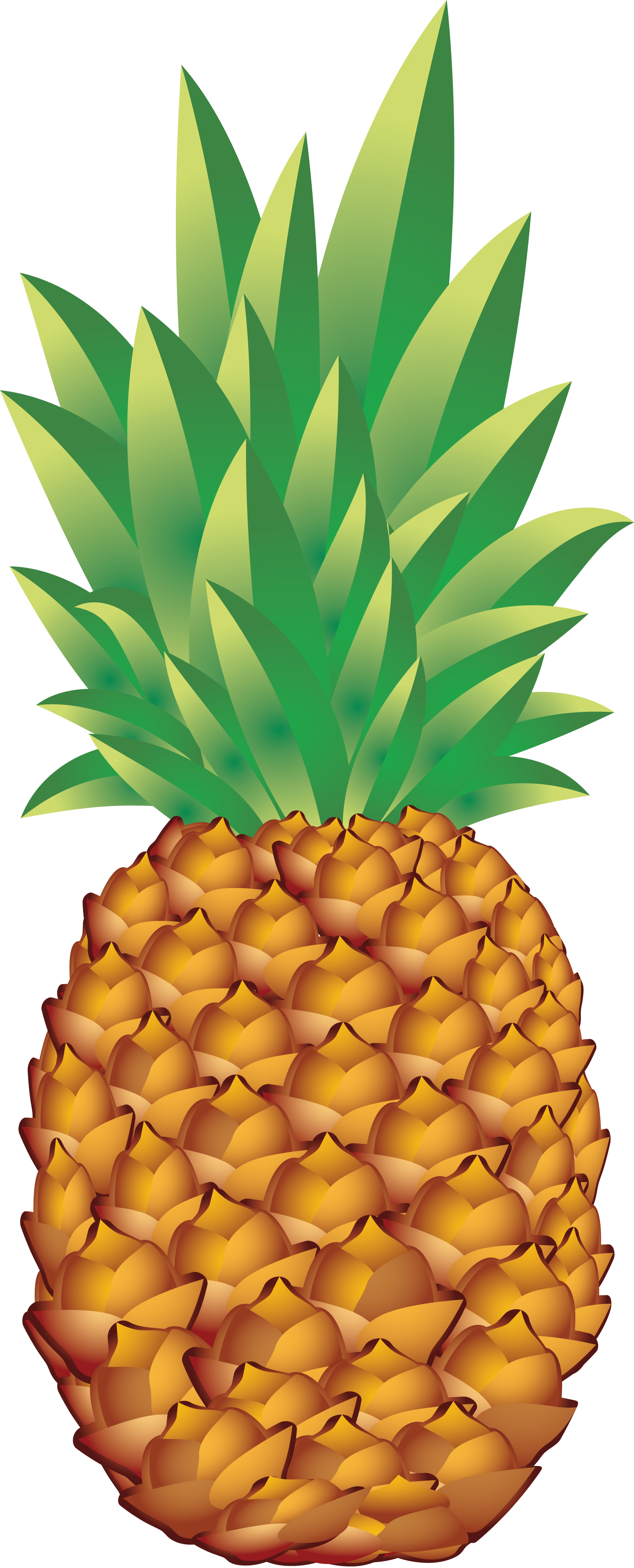 Pineapple clipart no background