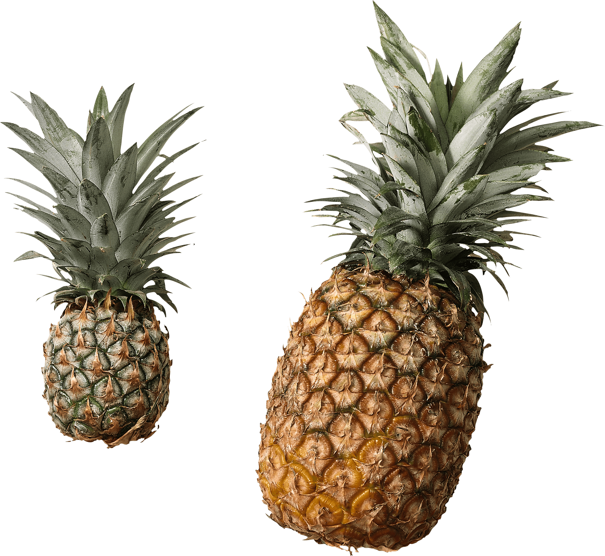 Pine apple clipart vector download Big Pineapple transparent PNG - StickPNG vector download