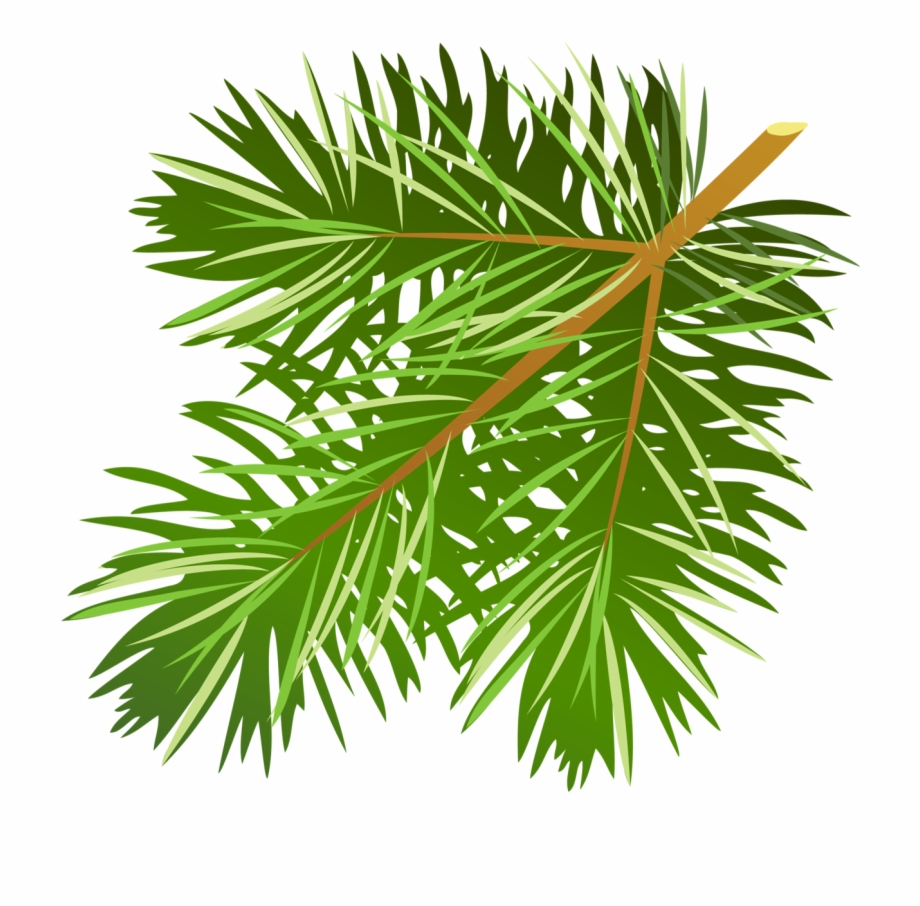 Pine branches clipart clipart stock Pine Tree Branch Clipart - Pine Tree Branch Clip Art ... clipart stock