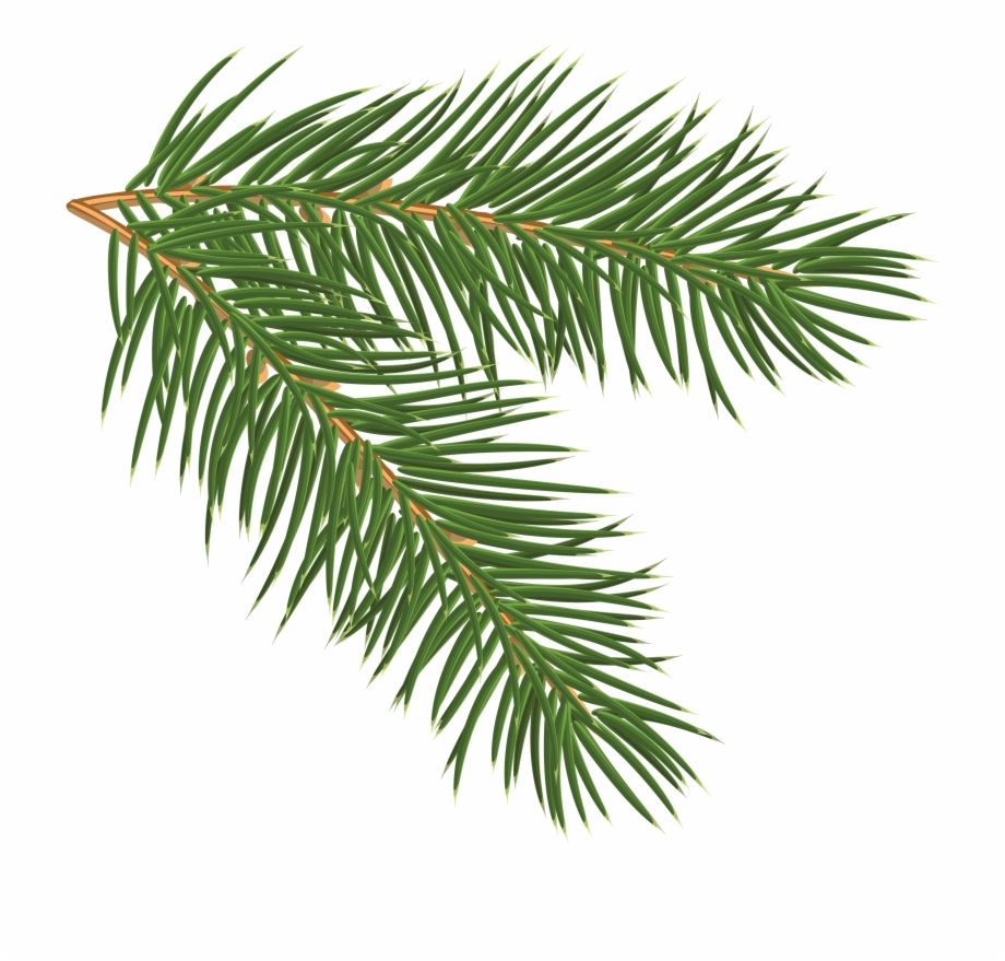 Pine branches clipart clipart black and white library Pine Tree Branch - Pine Branch Clip Art, Transparent Png ... clipart black and white library