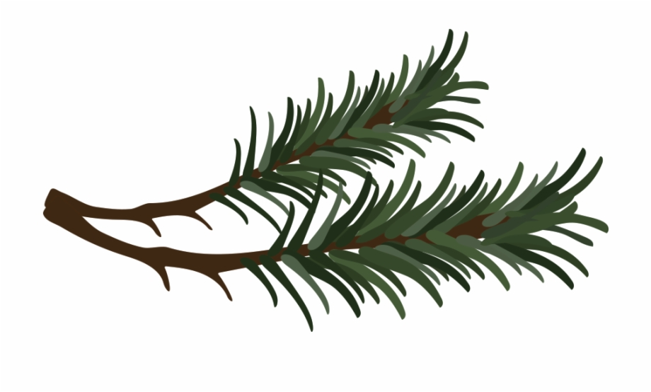 Pine branches clipart clip transparent Branch Drawing Pine Needle - Pine Needle Clipart Free PNG ... clip transparent
