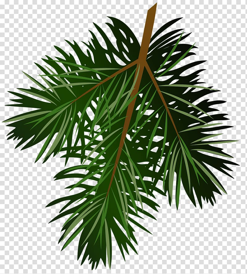 Pine branches clipart jpg library Green leafed plant illustration, Pine Branch , Pine Branch ... jpg library