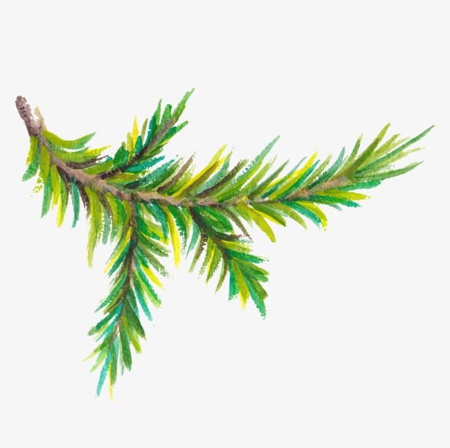 Pine branches clipart clipart freeuse library Watercolor Pine Trees Branch PNG, Clipart, Branch Clipart ... clipart freeuse library