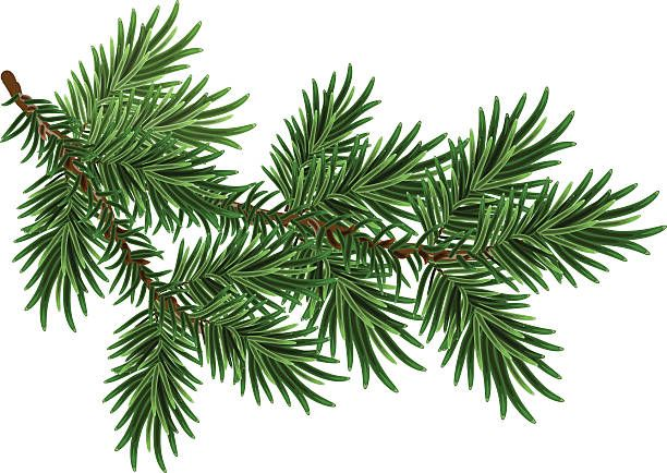 Pine branches clipart vector Branch Clip Art, Vector Images & Illustrations - iStock ... vector