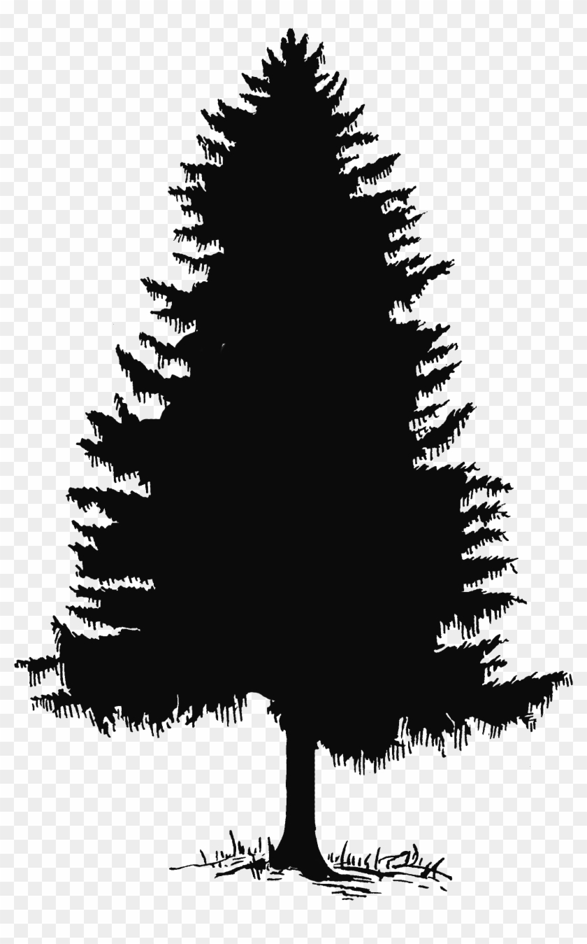 Pine silhouette clipart black and white svg freeuse Pine Tree Tree Silhouette And Clip Art On 2 - Pine Tree ... svg freeuse