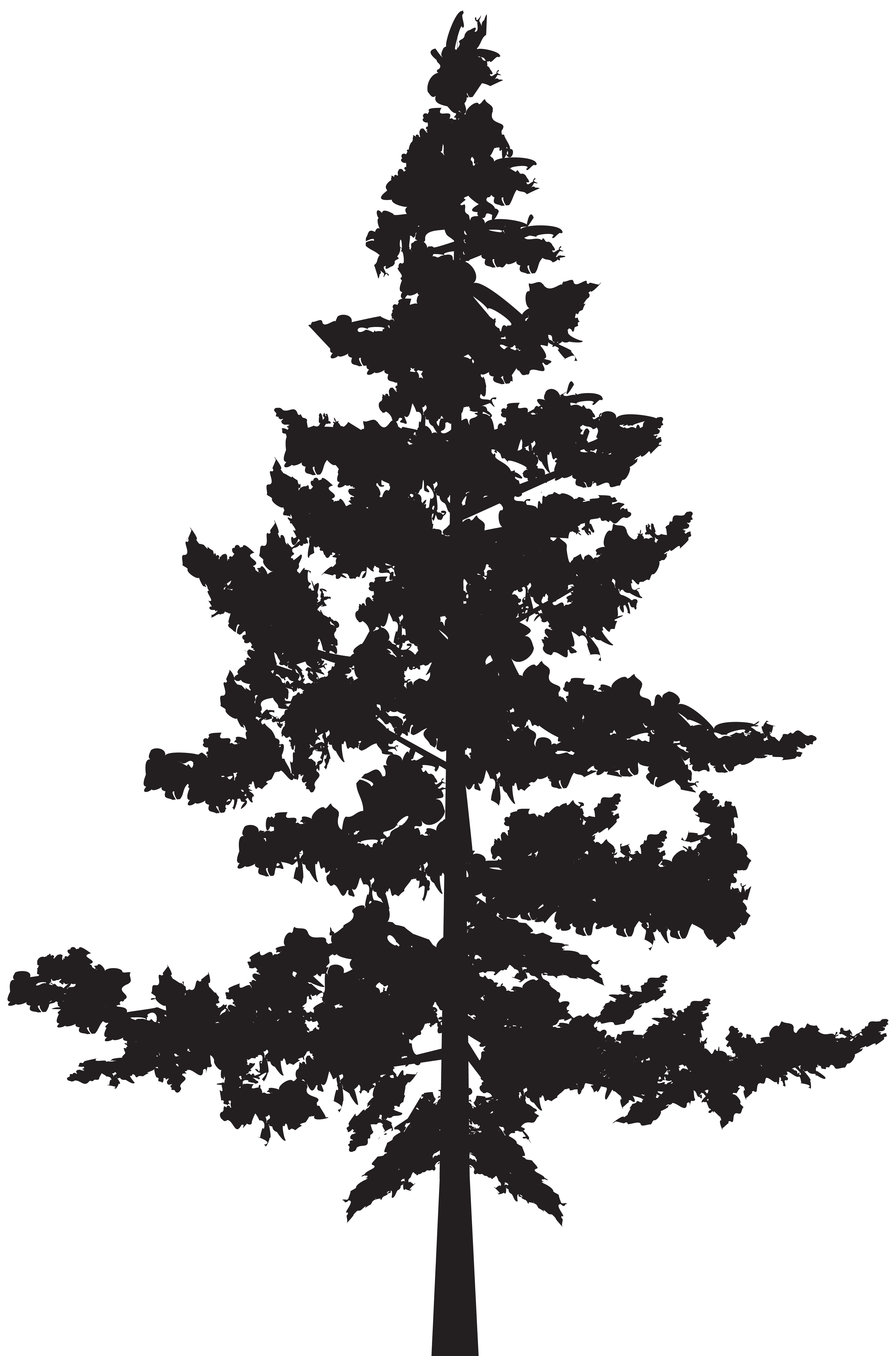 Pine silhouette clipart black and white svg transparent stock Black pine Tree Pinus contorta - Tree PNG Silhouette Clip ... svg transparent stock