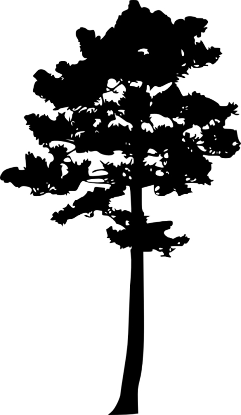 Pine tree clipart silhouette clip library library pine tree silhouette png - Free PNG Images | TOPpng clip library library