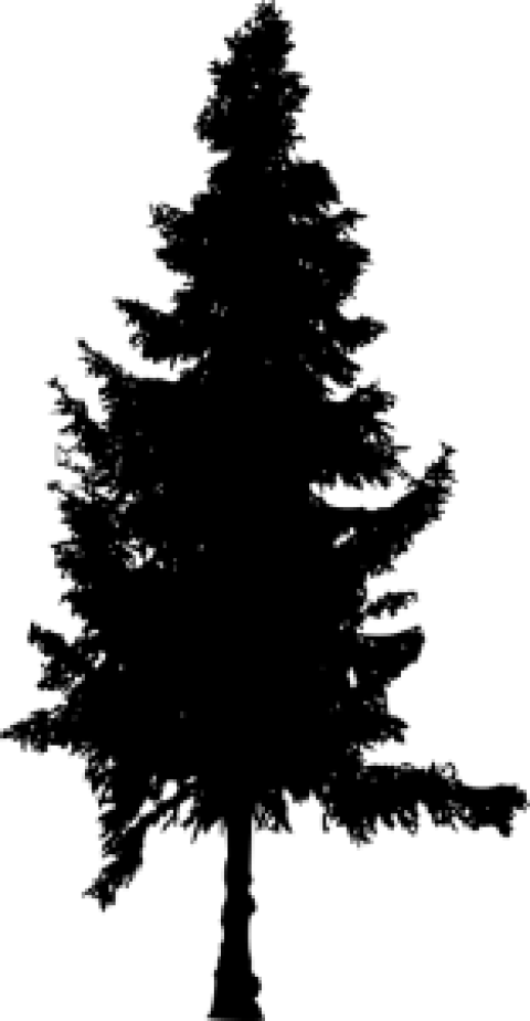 Pine tree clipart silhouette image library Pine Tree Silhouette png - Free PNG Images | TOPpng image library