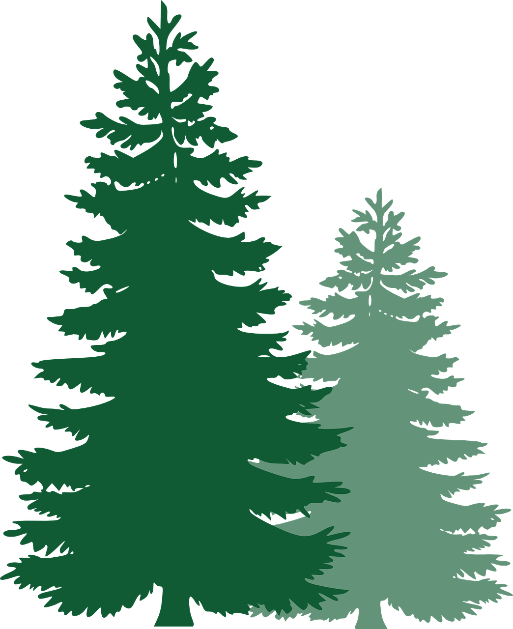 Pine tree forest clipart image library stock Forest, Pine Trees Spruce Trees Evergreen Trees Tr #forest, #pine ... image library stock