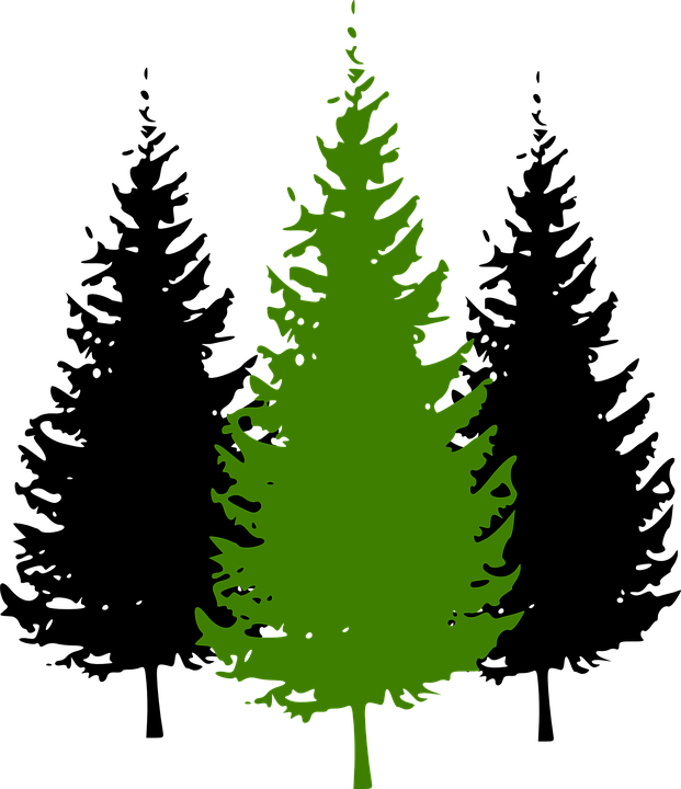 Pine tree with snow clipart clipart free Pine Tree Clipart Coniferous Tree#3793174 clipart free