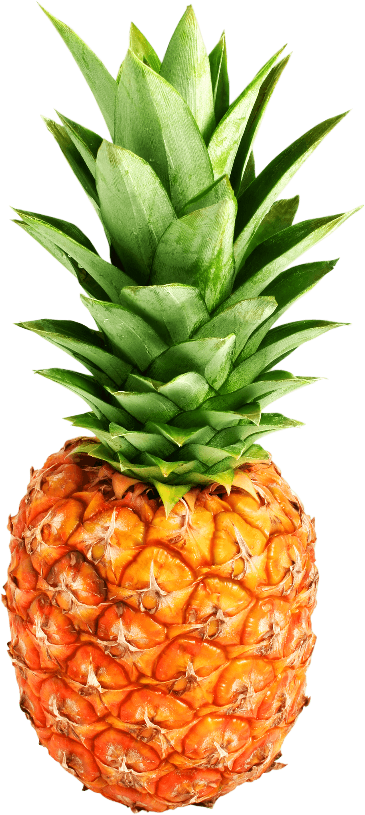 Pineapple clipart no background picture black and white library Pineapple PNG Images Transparent Free Download | PNGMart.com picture black and white library