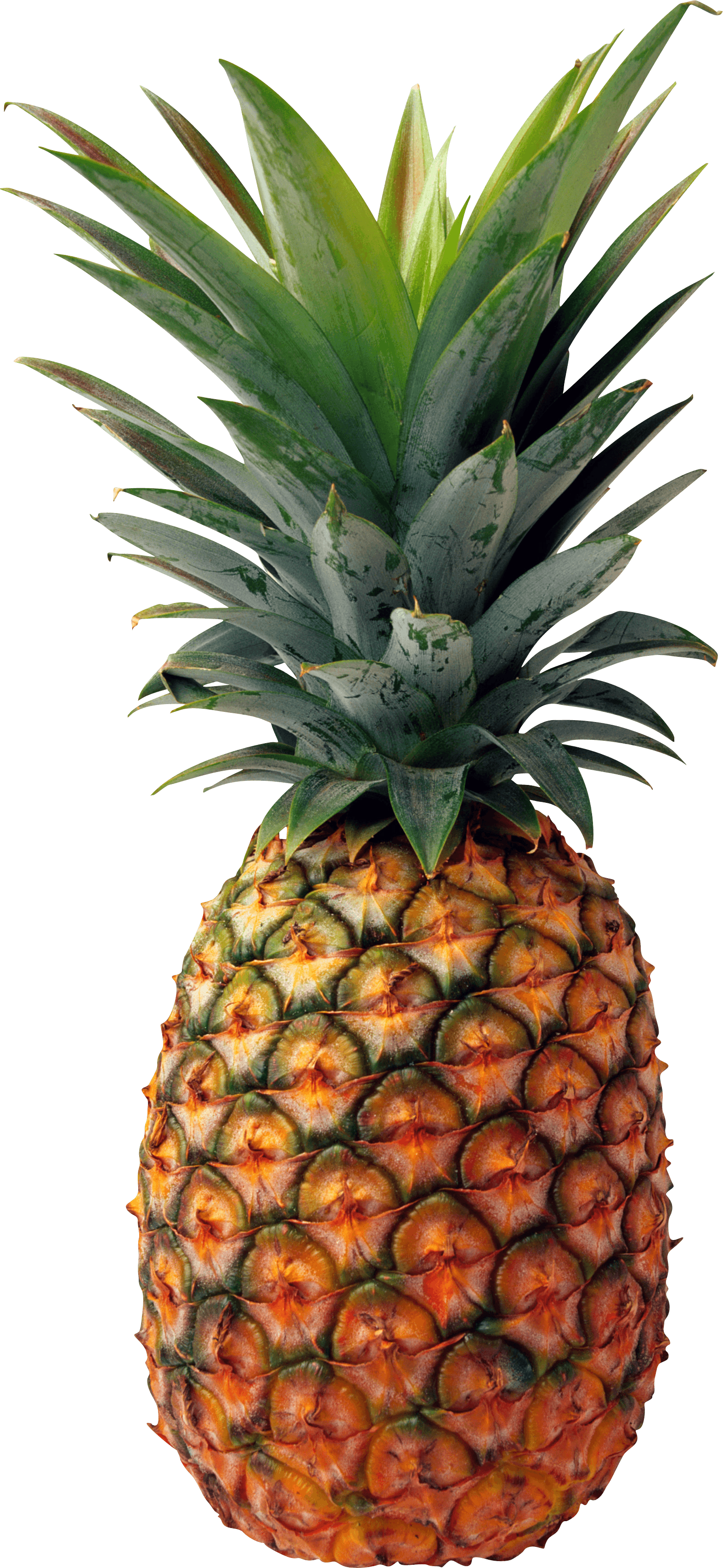 Pineapple clipart no background image library library Pineapple PNG Images Transparent Free Download | PNGMart.com image library library