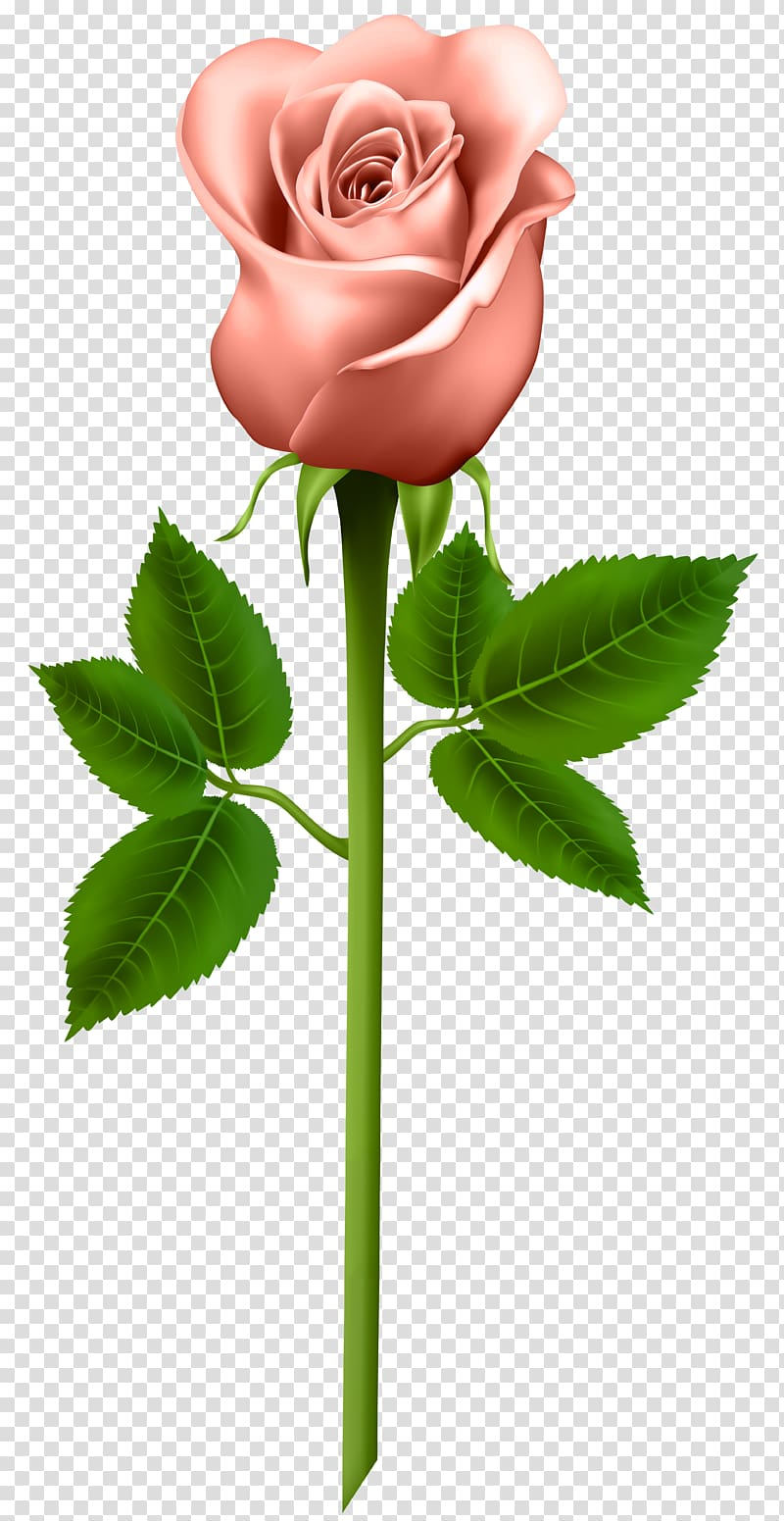 Pink and orange flower stem clipart vector free Pink rose flower , Rose Purple , Orange Rose transparent ... vector free