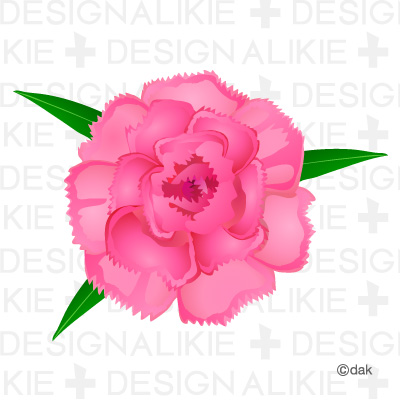 Pink carnation clipart png Free Carnation Flower Cliparts, Download Free Clip Art, Free ... png