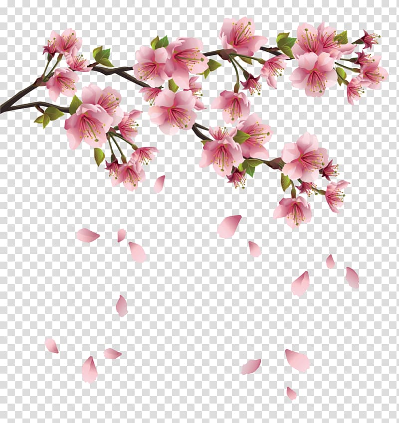 Pink cherry blossoms clipart clip free download Petal , Beautiful Pink Spring Branch with Falling Petals ... clip free download