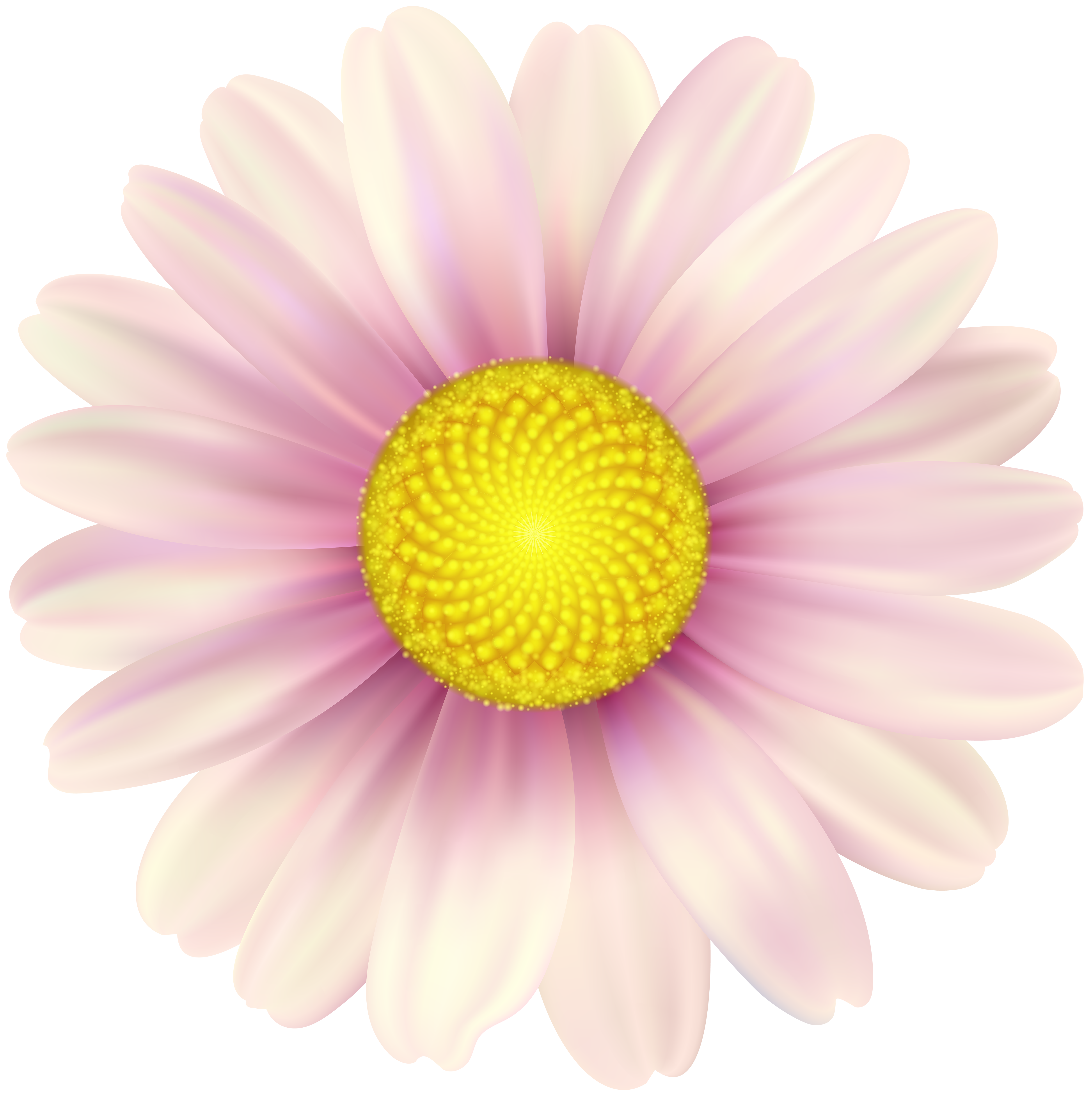 Pink daisy flower clipart svg transparent download Pink Daisy Clip Art Image   Gallery Yopriceville - High-Quality ... svg transparent download