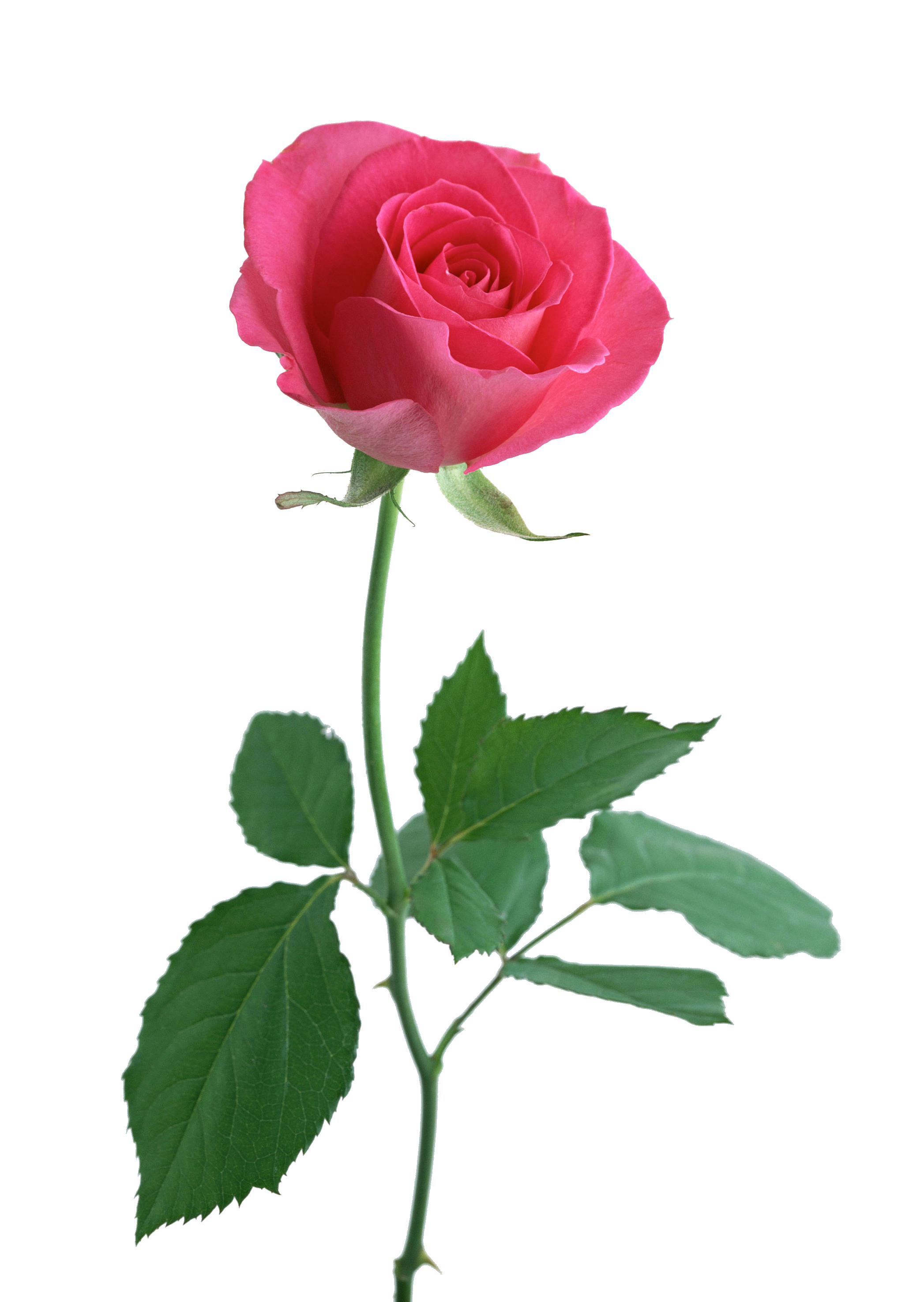 Pink flower with stem clipart image free stock 54a644475ccacf4a44ec72b9 image free stock