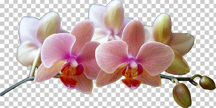 Pink flowers with shadows clipart vector library Phalaenopsis Equestris Cut Flowers Eye Shadow Lilac Clinique ... vector library