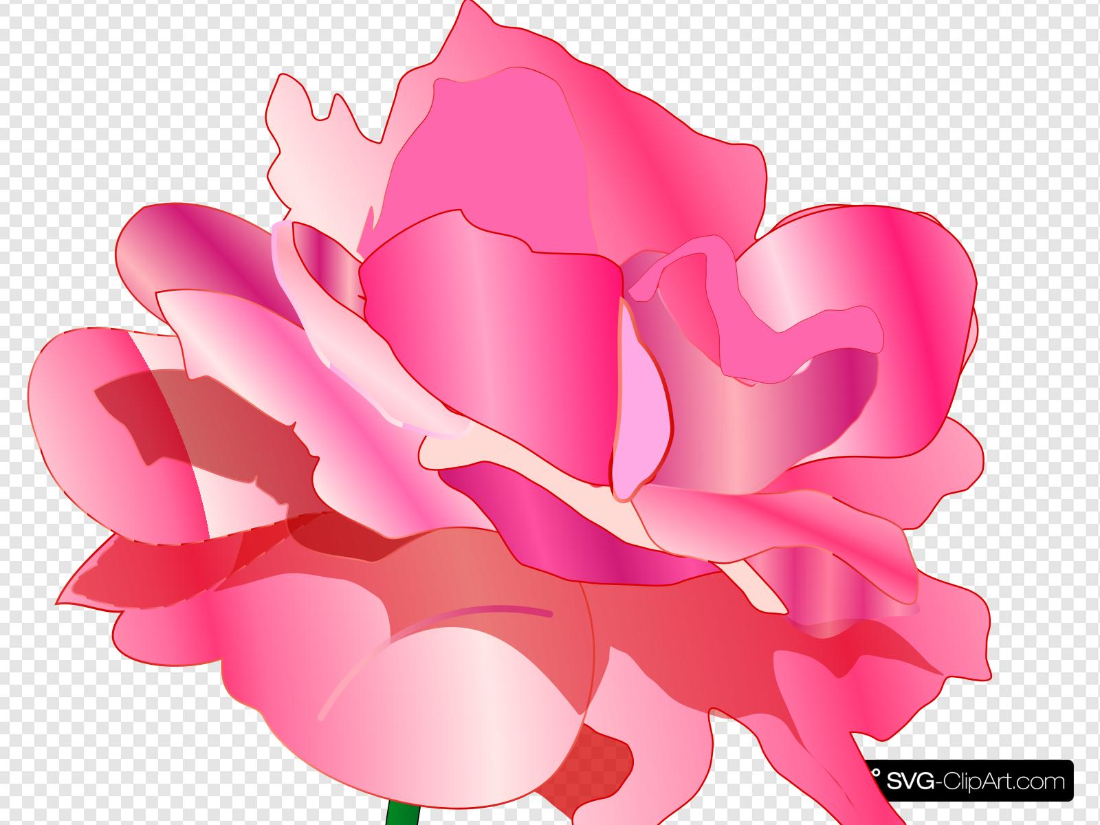 Pink flowers with shadows clipart jpg free stock Pink Rose No Shadow Clip art, Icon and SVG - SVG Clipart jpg free stock