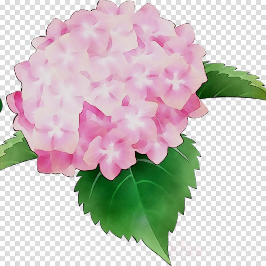 Pink hydrangea clipart image free stock Pink Flower Cartoon clipart - Hydrangea, Flower, Pink ... image free stock