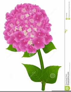 Pink hydrangea clipart svg library library Pink Hydrangea Clipart | Free Images at Clker.com - vector ... svg library library