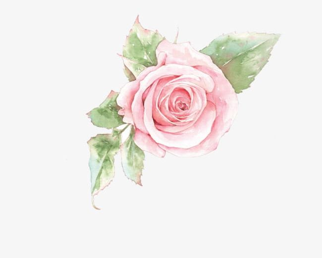 Pink rose flower clipart jpg library download Pink Rose Flower PNG, Clipart, Flower Clipart, Flower ... jpg library download