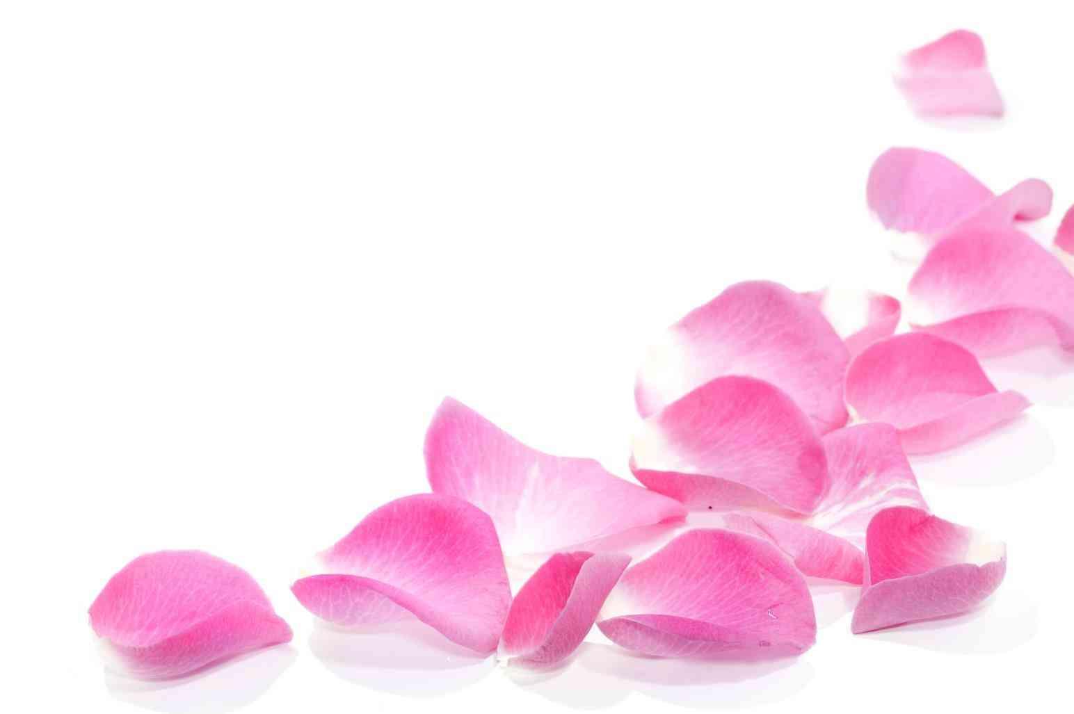 Pink rose petals clipart clip art free library Rose Petals Clipart   Free download best Rose Petals Clipart ... clip art free library