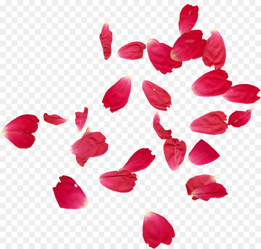 Pink rose petals clipart graphic transparent Faridabad Petal Rose Flower Henna - Falling rose petals 1874 ... graphic transparent