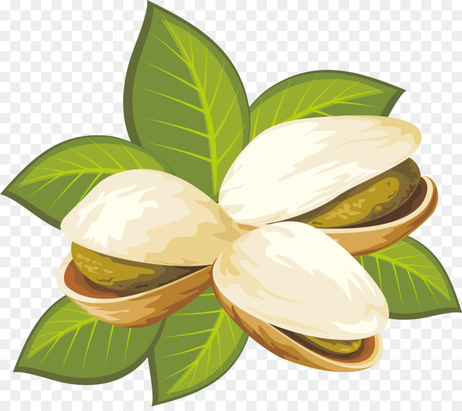Pistachip clipart graphic free library Plant Leaf png download - 1959*1722 - Free Transparent ... graphic free library