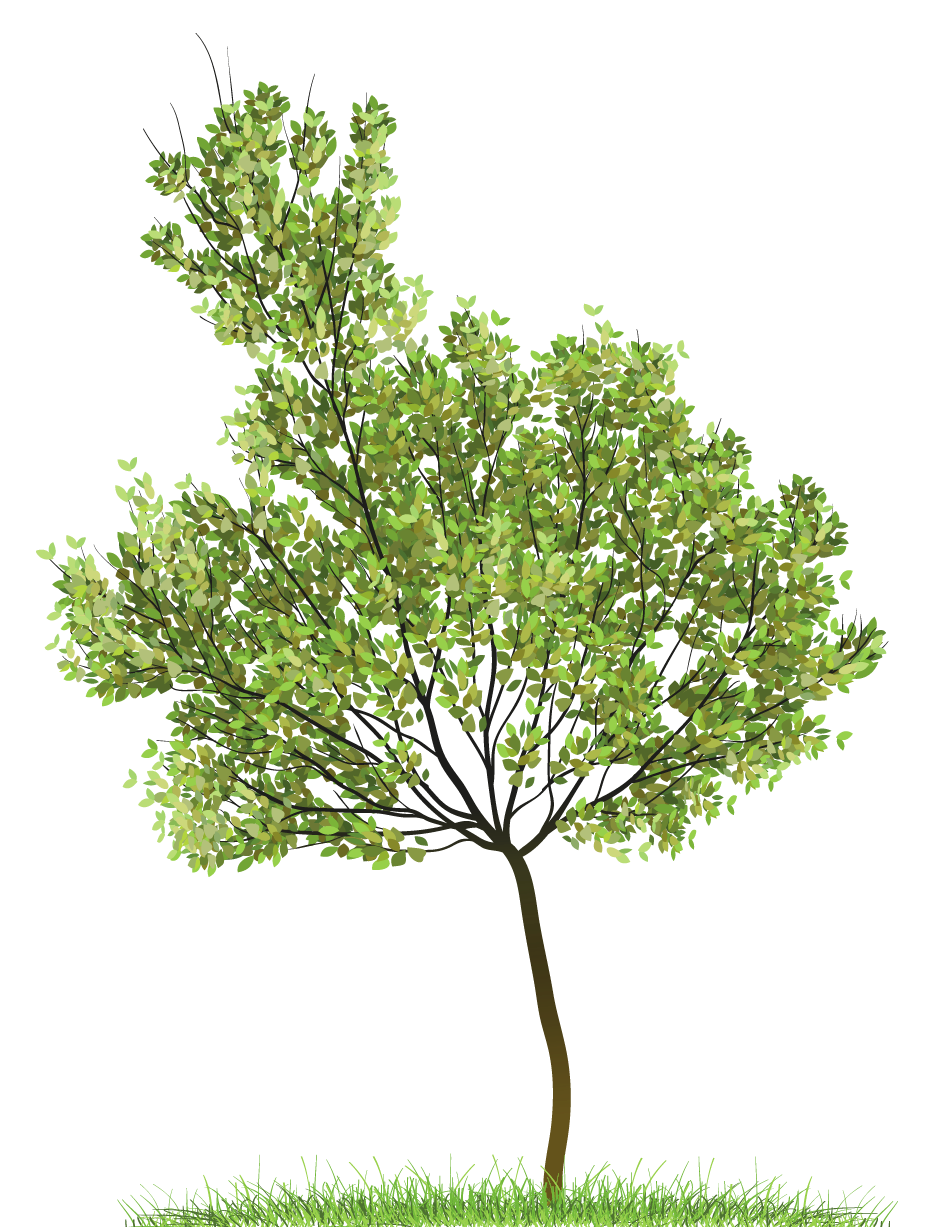 Plan view tree clipart image black and white Transparent Green Tree PNG Clipart | Gallery Yopriceville - High ... image black and white