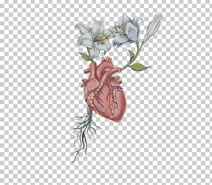 Plant anatomy clipart vector freeuse Heart Flower Drawing Anatomy PNG, Clipart, Anatomy, Aorta ... vector freeuse