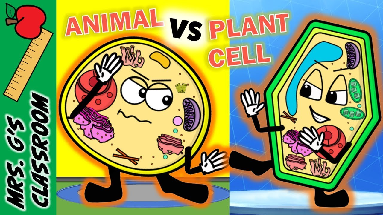 Plant and an animal next to each other clipart clip freeuse library WHAT IS THE DIFFERENCE BETWEEN PLANT AND ANIMAL CELL clip freeuse library