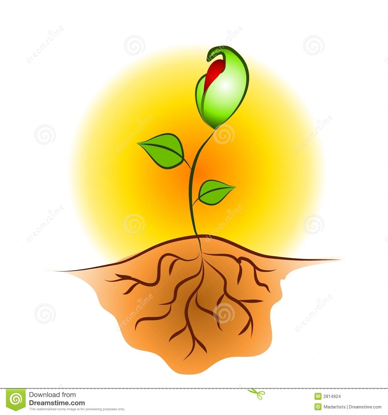 Plant clip art images svg library download From Seed To Plant Clipart - Clipart Kid svg library download