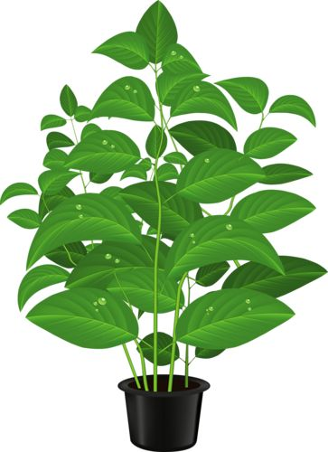 Plant clip art images png green home plant | ✿° my garden valley ° ✿ | Pinterest | Flower ... png