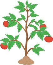 Plant clip art images svg free stock Clip art plant - ClipartFox svg free stock