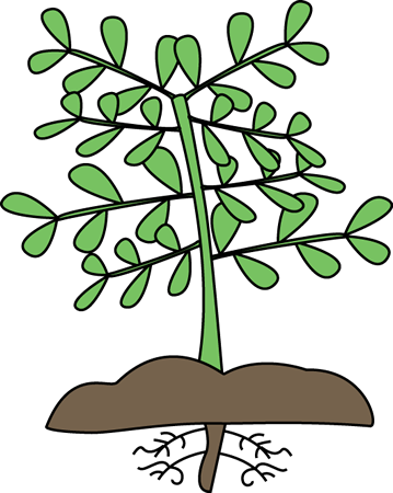Plant clipart images graphic black and white library Parts Of A Plant Clipart | Clipart Panda - Free Clipart Images graphic black and white library