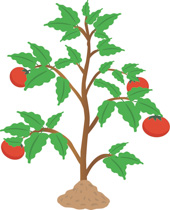 Plant clipart images clip download Free Plants Clipart - Clip Art Pictures - Graphics - Illustrations clip download