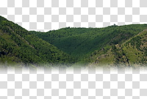 Plant community clipart clip free Nature reserve Shrubland Wilderness Plant community, plant ... clip free
