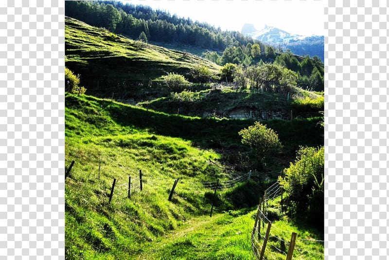 Plant community clipart free Biome Vegetation Mount Scenery Nature reserve Plant ... free