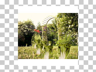 Plant community clipart image royalty free 4,698 plant Community PNG cliparts for free download   UIHere image royalty free