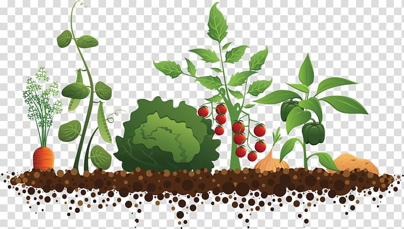 Plant community clipart clipart library stock Multicolored vegetable plant , Community gardening Roof ... clipart library stock