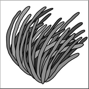 Plant grayscale clipart clip art download Clip Art: Plants: Seagrass Grayscale I abcteach.com   abcteach clip art download