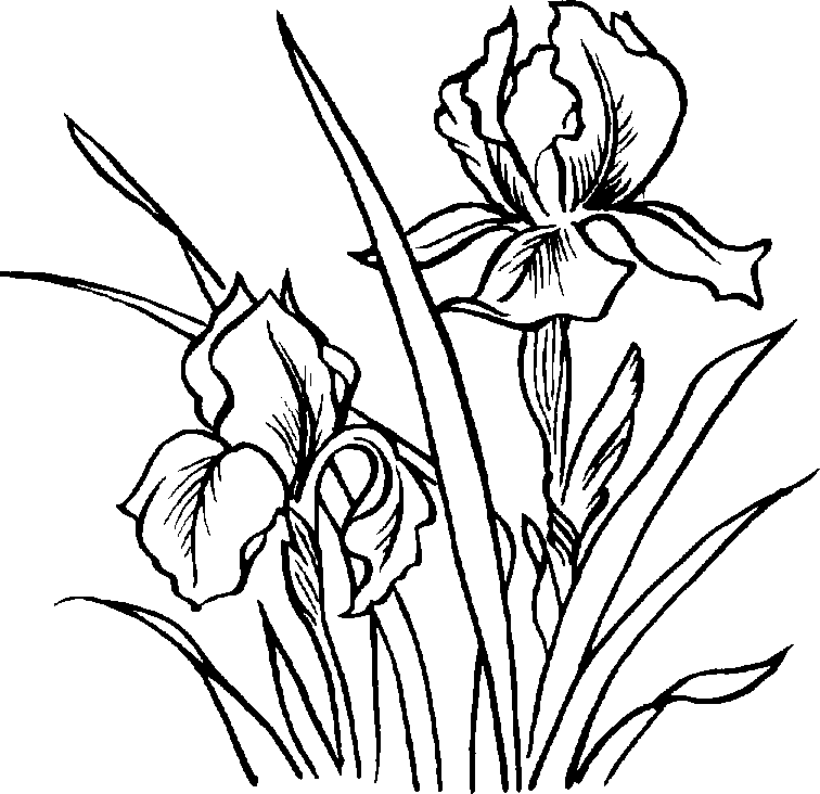 Plant grayscale clipart clip art royalty free library Free Flower Images Black And White, Download Free Clip Art ... clip art royalty free library