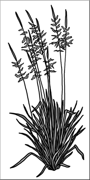 Plant grayscale clipart vector library download Clip Art: Plants: Wild Rice Grayscale I abcteach.com   abcteach vector library download