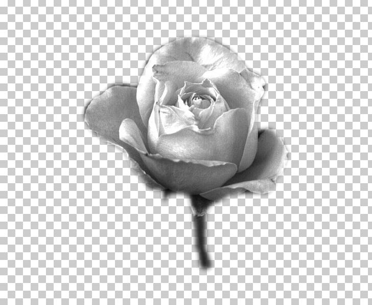 Plant grayscale clipart clip freeuse Black And White Garden Roses Blog Photography Grayscale PNG ... clip freeuse
